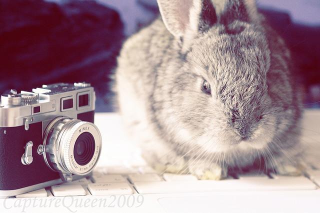 【全部無料!】ハイクオリティーカメラアプリ5選!