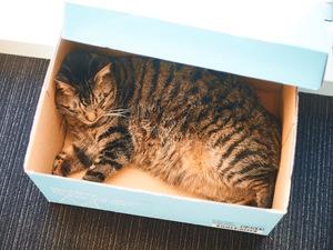 オフィスには猫が2匹います!猫をモフモフしながら仕事ができる、猫好きには最高の環境です。