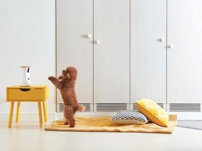 Furboドッグカメラがあれば、外出中でも家にいるペットに餌をあげることが出来ます!